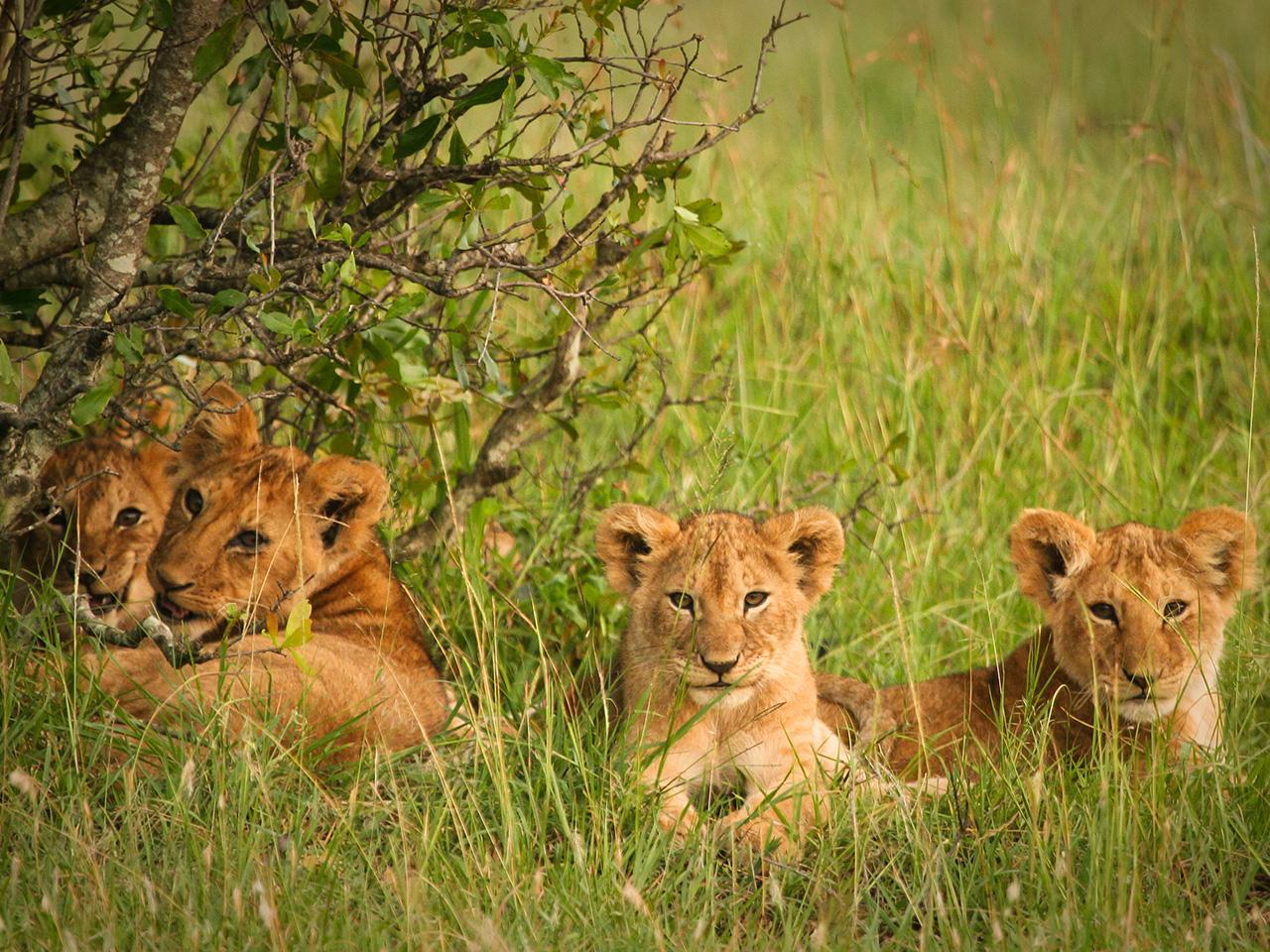 Listopedia: The Wildlife Watcher's Bucket List