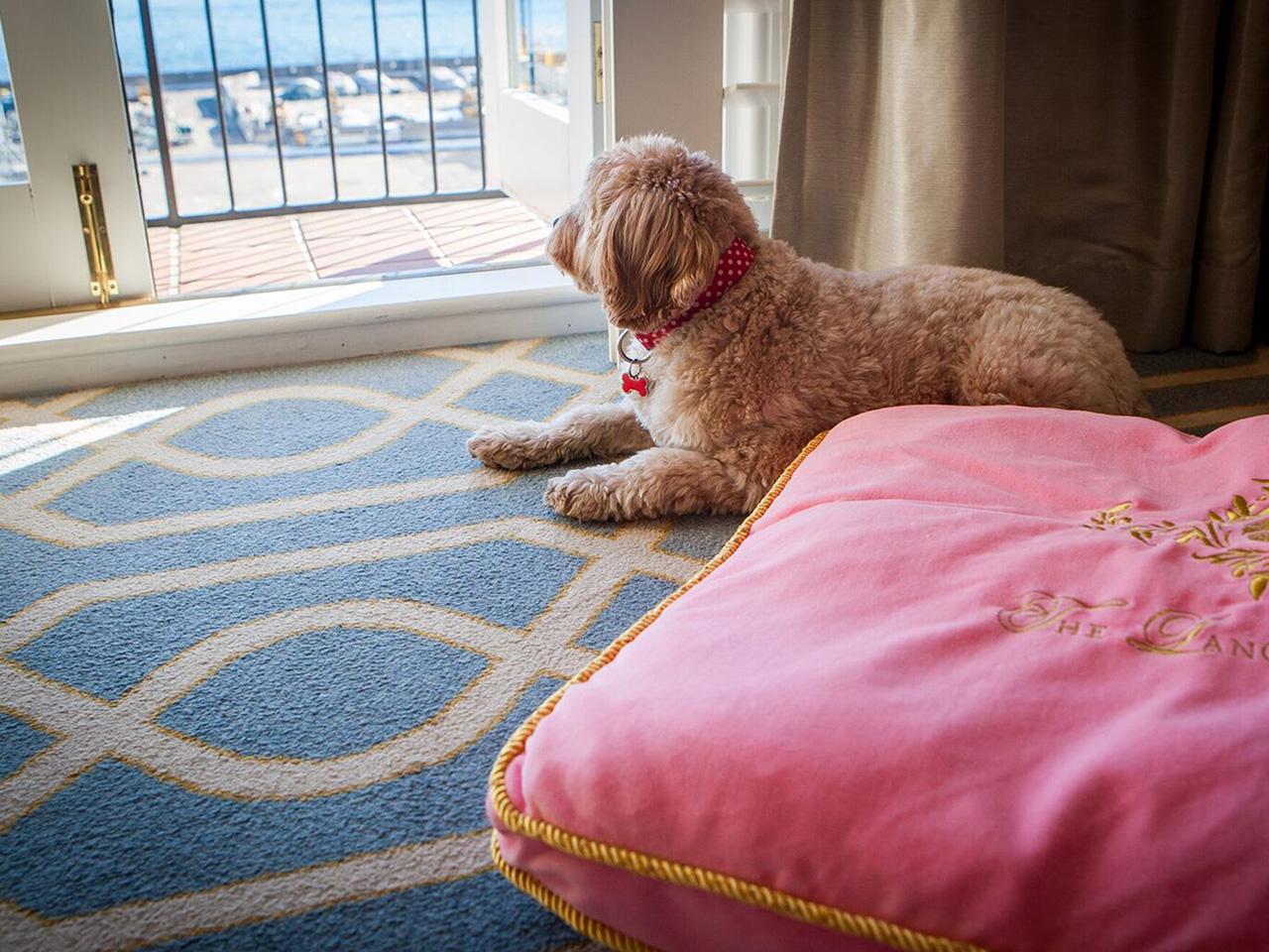 Pampered pets: The Langham Sydney