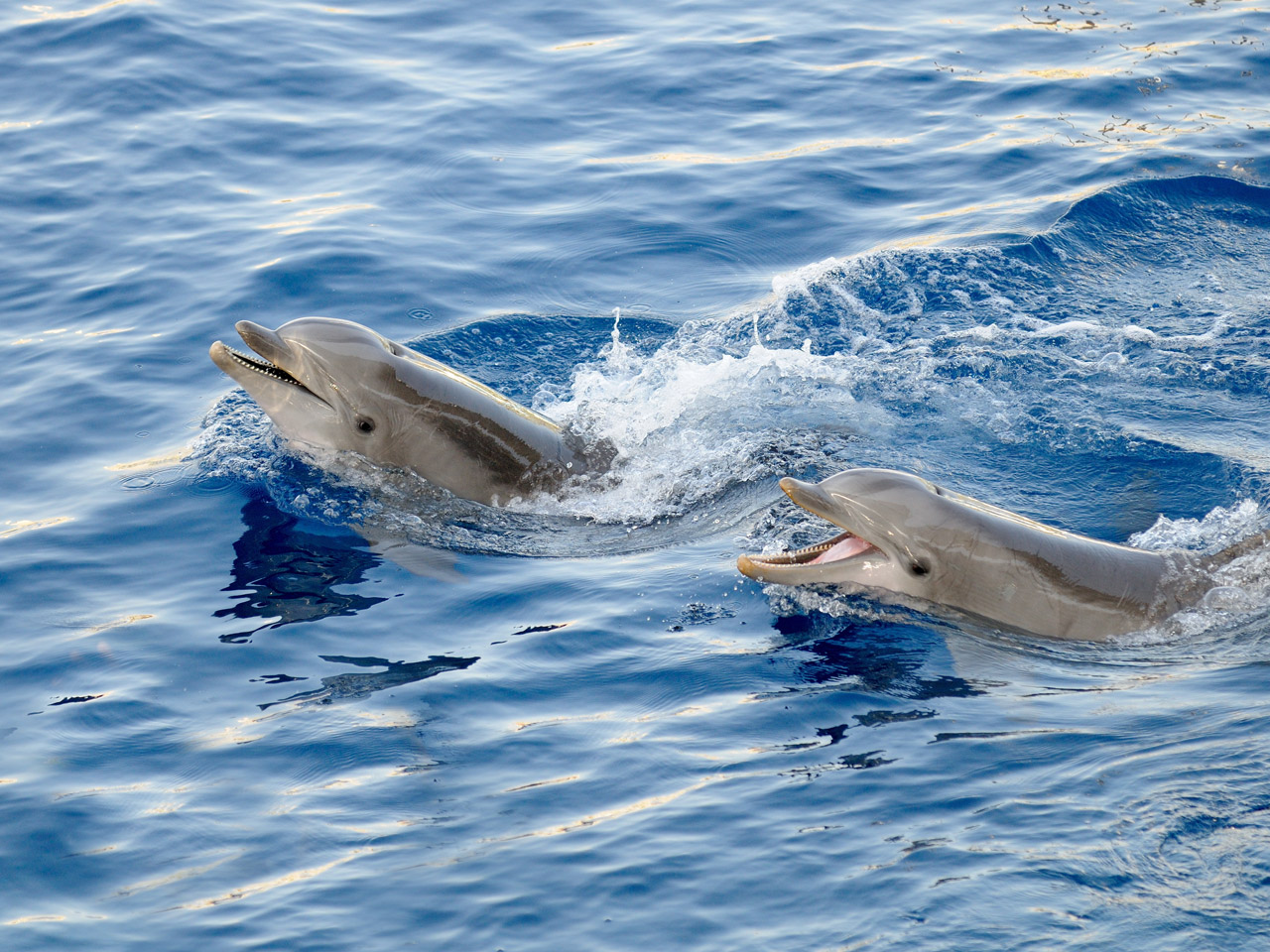 Three Dolphin Swims not to be Missed