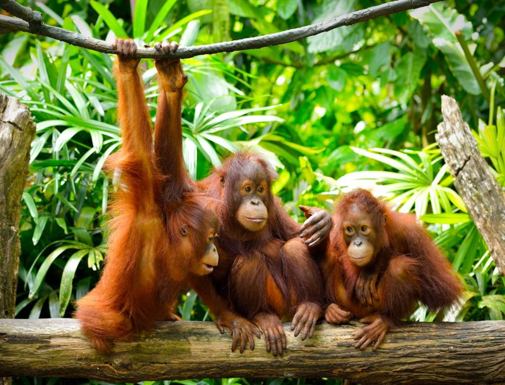 Orangutan porn nude tube