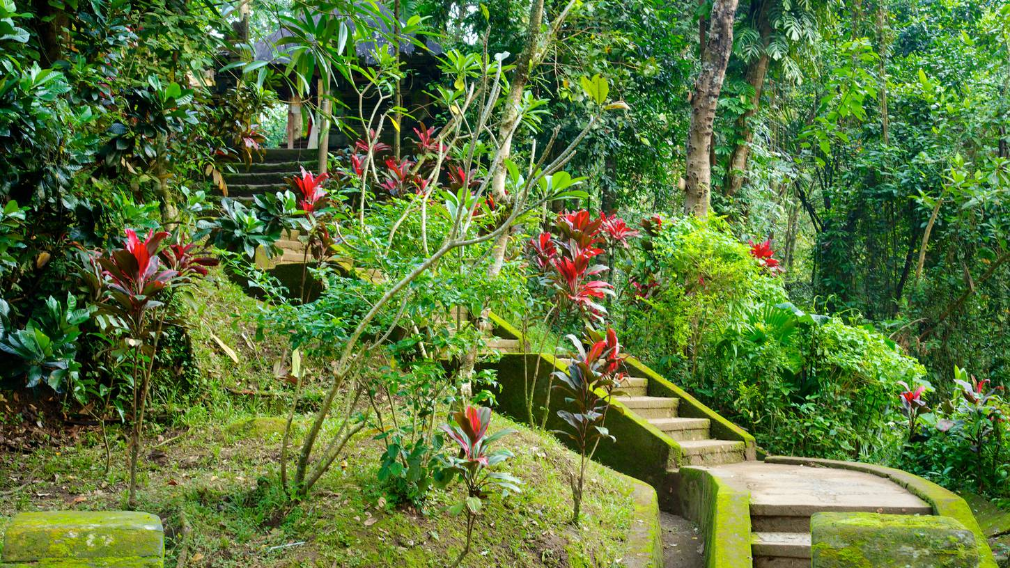 ubud hotels: 524 cheap accommodation in ubud | expedia.co.nz