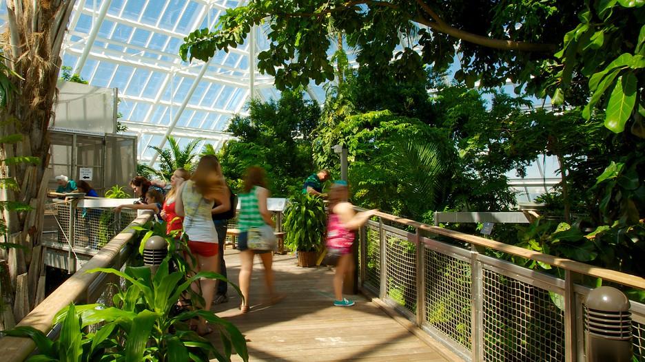 moody gardens in houston texas expedia