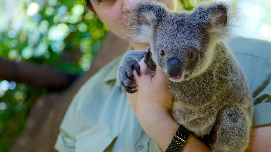 凯恩斯 凯恩斯热带雨林动物园 | expedia.com.tw