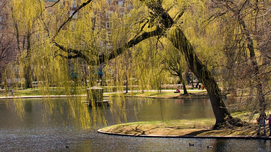 Boston public garden in boston massachusetts expedia - Hotels near boston public garden ...