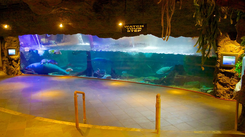Dallas World Aquarium in Dallas, Texas | Expedia
