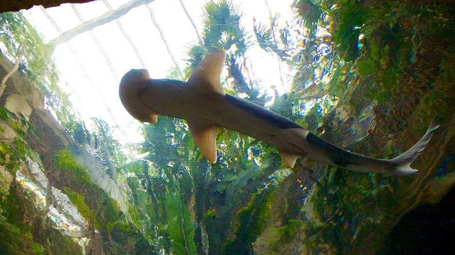 Dallas World Aquarium Informaci 243 N De Dallas World