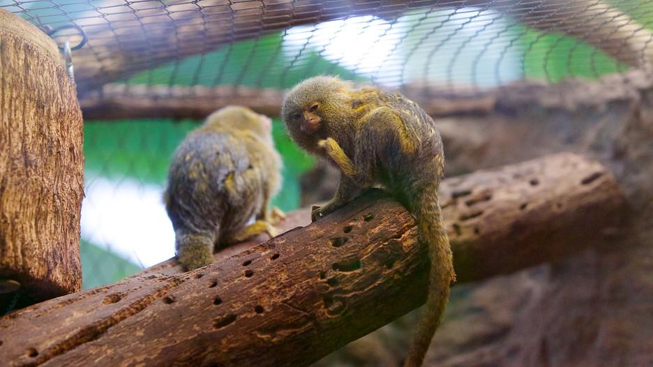 Dallas World Aquarium In Dallas Texas Expedia