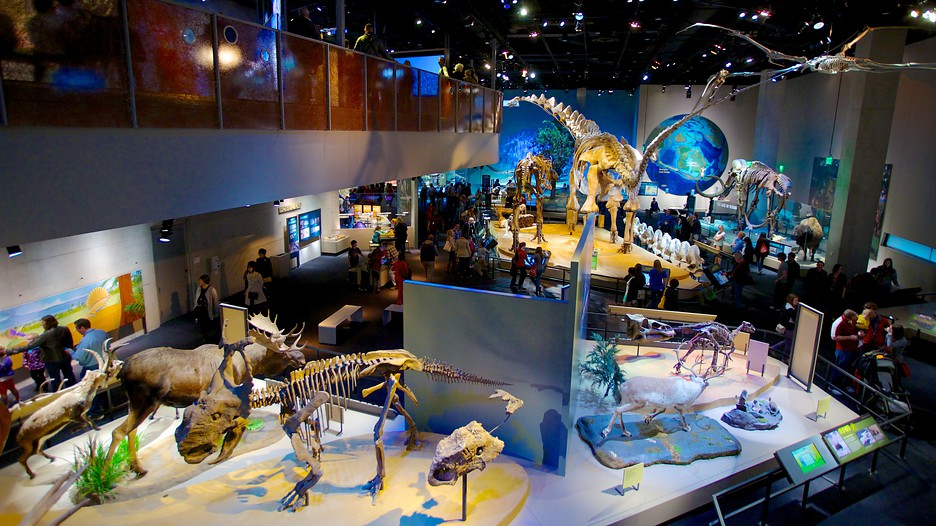 Museum Of Natural History Science Fair