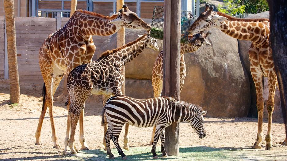 Resultado de imagen para Zoológico de Houston