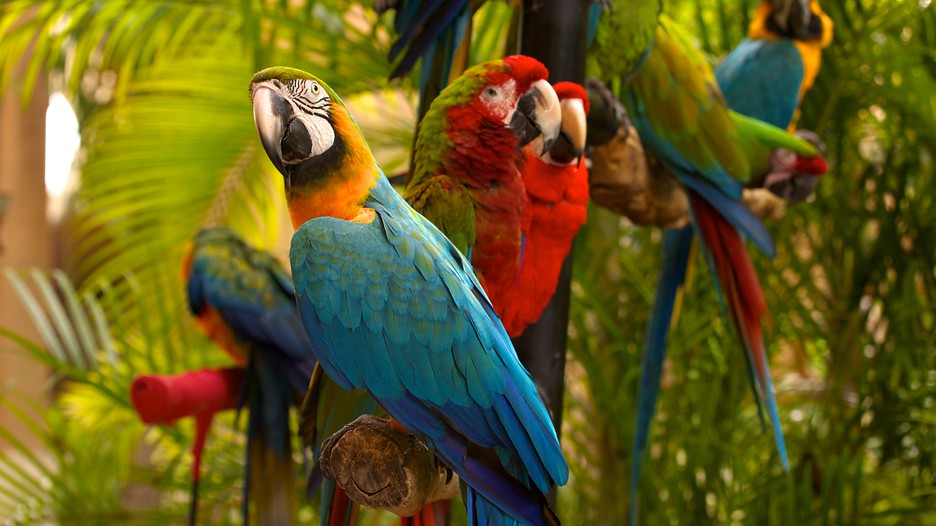 Coupons for parrot jungle island miami