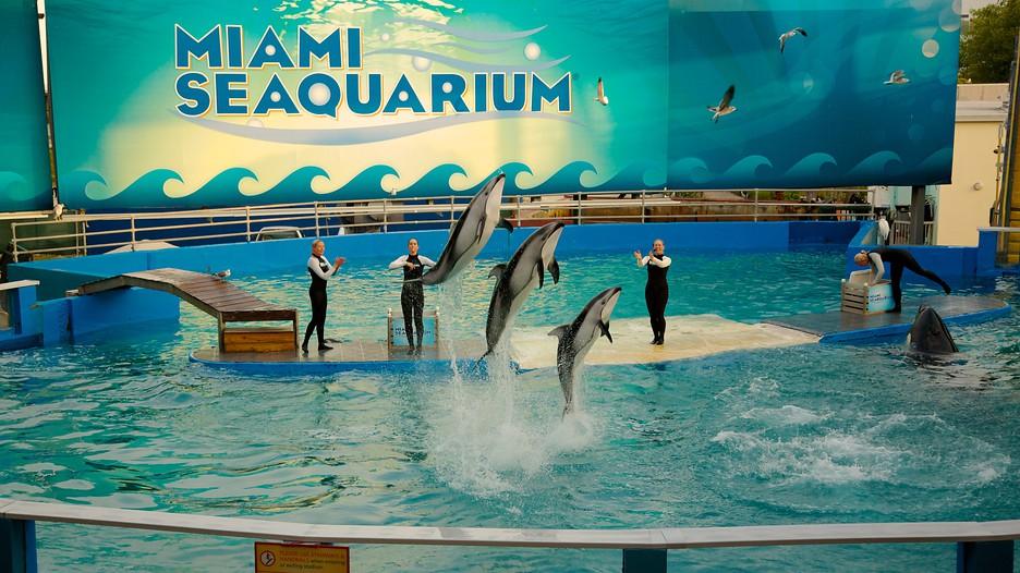 Cars Beginning With D >> Miami Seaquarium in Miami, Florida | Expedia