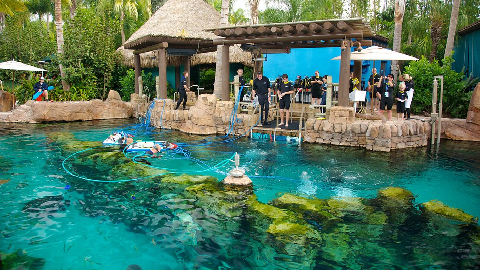Seaworld 174 Orlando In Orlando Florida Expedia
