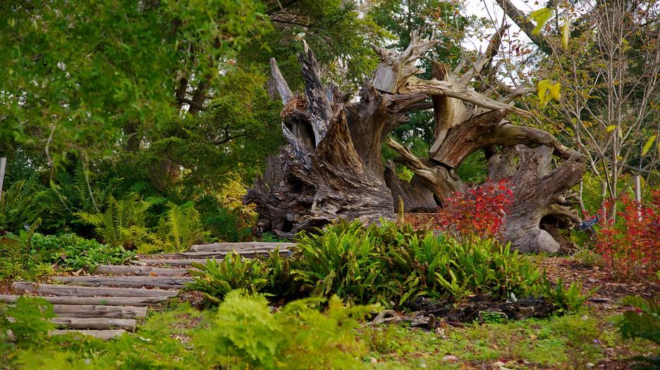 Morris Arboretum In Philadelphia Pennsylvania Expedia