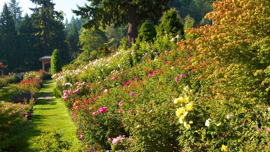 International rose test garden in portland oregon expedia - International rose test garden portland ...