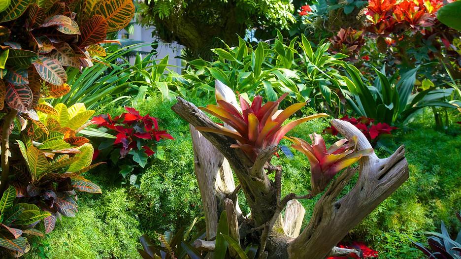 Jardín botánico de San Antonio: Información de Jardín ...