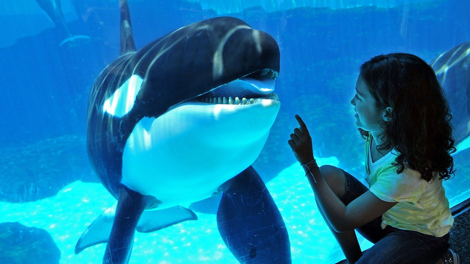 Seaworld In San Diego California Expedia