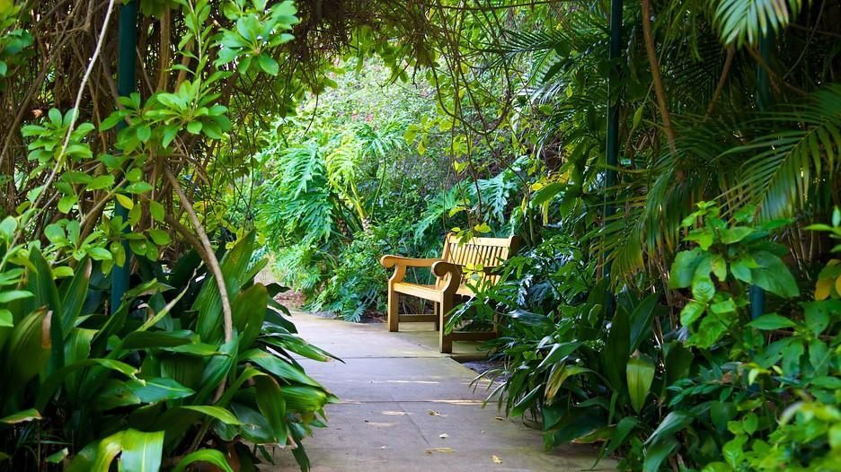Sunken Gardens In St Petersburg Florida