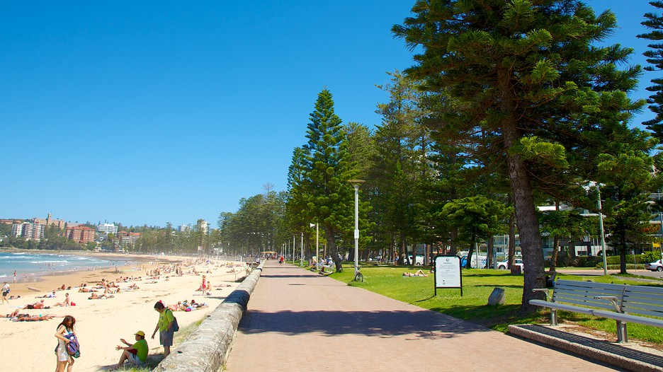 how to go manly beach from circular quay
