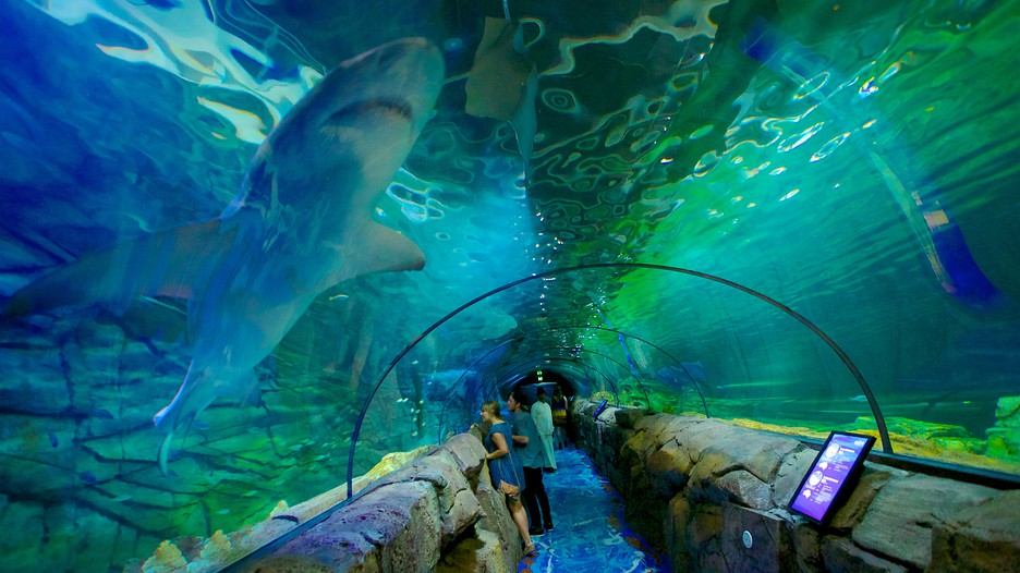 Largest Aquarium In Australia