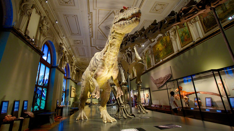 Museum Of Natural History In Vienna Expedia