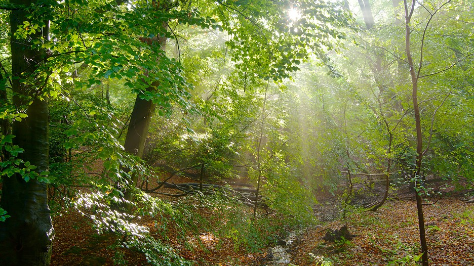 Epping Forest In London England Expedia Ca