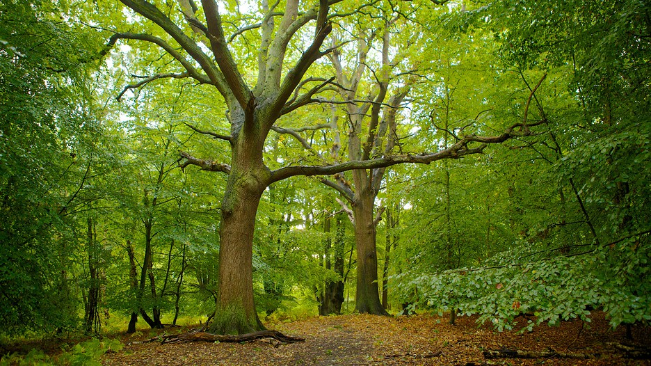Epping forest in london england for Rainforest londra