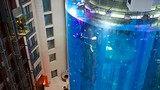 Aquadom - Berlino - Tourism Media