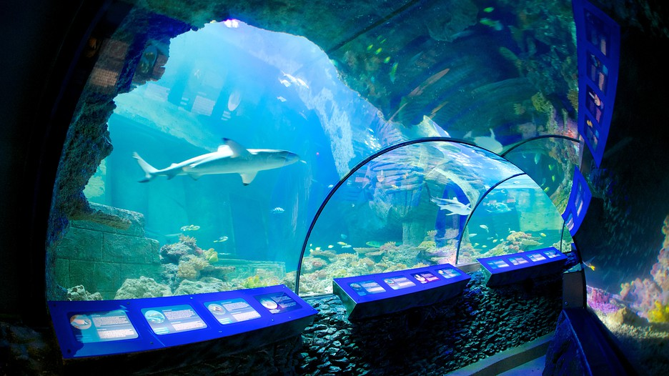 Sea Life Aquarium In Munich