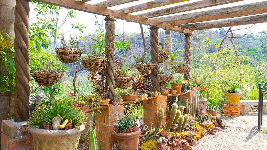 Jardines bot nicos de puerto vallarta informaci n de for Jardines pequenos mexicanos