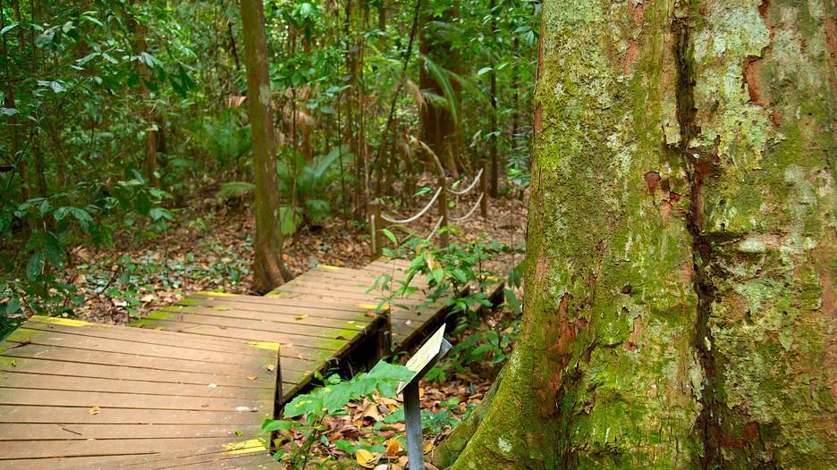 Bukit Timah Nature Reserve Car Park Map