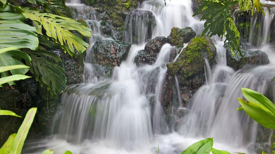 Singapore botanic gardens in singapore expedia for Botanic com jardin