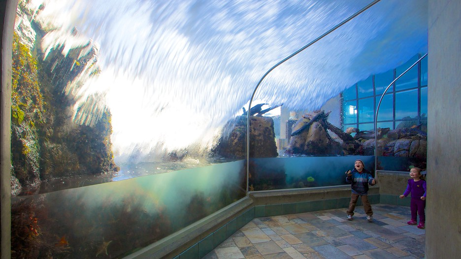 Monterey Bay Aquarium In Monterey California Expedia