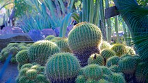 Palm springs vacations 2017 package save up to 603 - Moorten botanical garden and cactarium ...