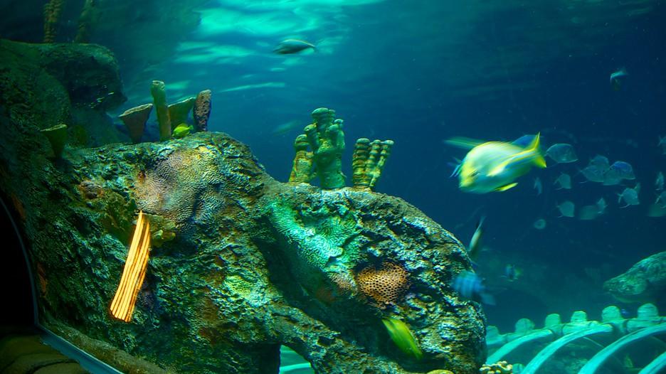 Sea Life Aquarium In Kansas City