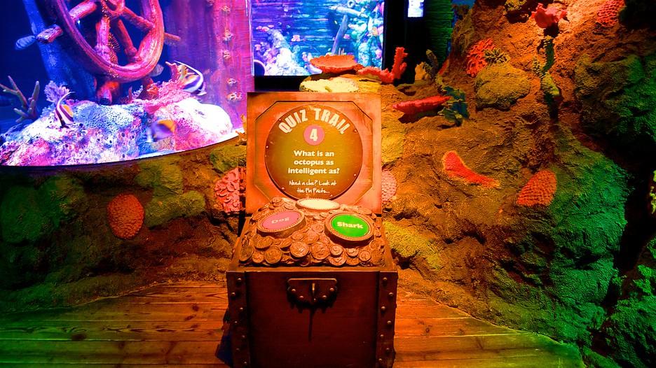 Sea Life Aquarium In Kansas City Expedia Ca