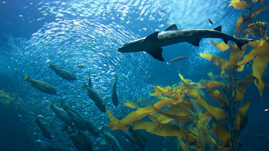 Image Result For Aquarium Of The Pasific