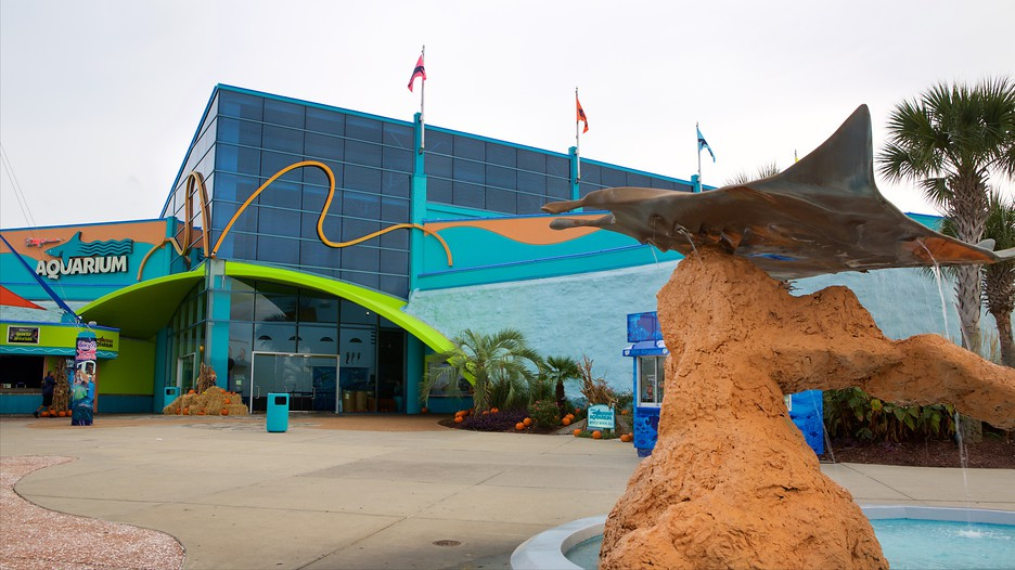 Ripley S Aquarium In Myrtle Beach South Carolina Expedia