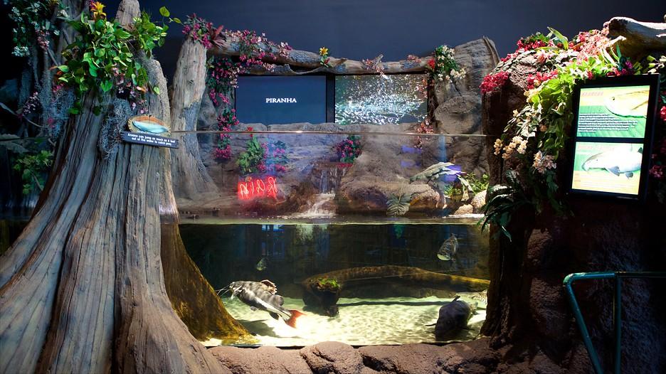Myrtle Beach Aquarium South Carolina