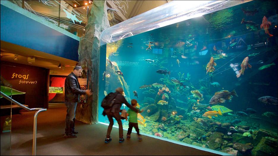 Vancouver Aquarium In Vancouver British Columbia