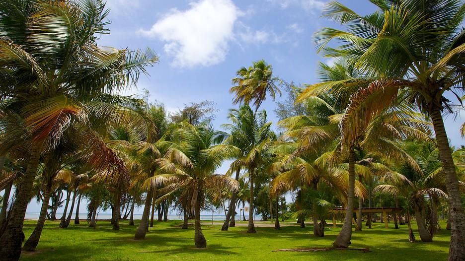 Mayaguez Puerto Rico Beaches Beach Puerto Rico Island