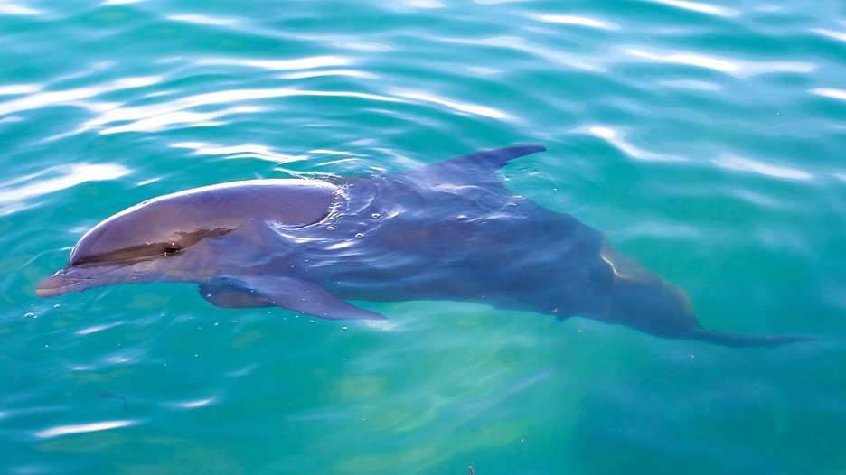 Dolphin Cove in Montego Bay,   Expedia.ca
