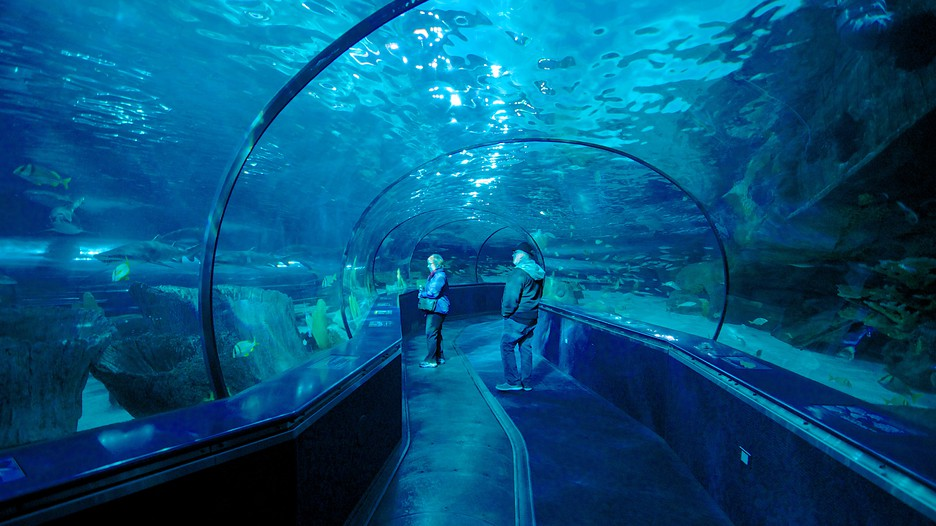 Ripley's® Aquarium in Myrtle Beach, South Carolina is located in Broadway-at-the-Beach, an entertainment and dining complex that features restaurants, rides, shops and the 85, square foot Ripley's Aquarium.