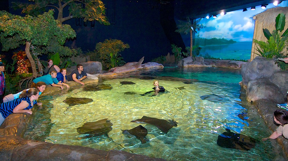 Aquarium At Broadway At The Beach In Myrtle Beach