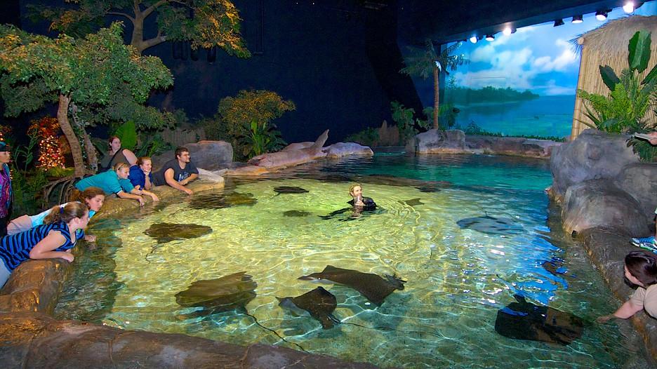 Ripley 39 S Aquarium In Myrtle Beach South Carolina
