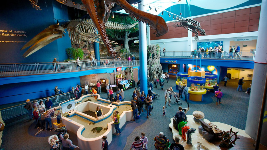 Aquarium In Pigeon Forge