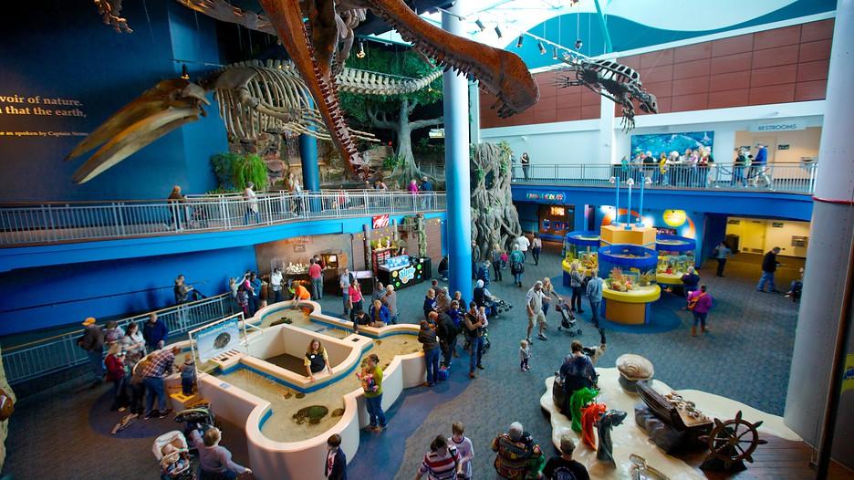 Ripley S Aquarium Of The Smokies In Gatlinburg Tennessee