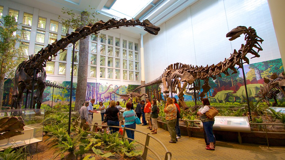 Museum Of Natural History Deals