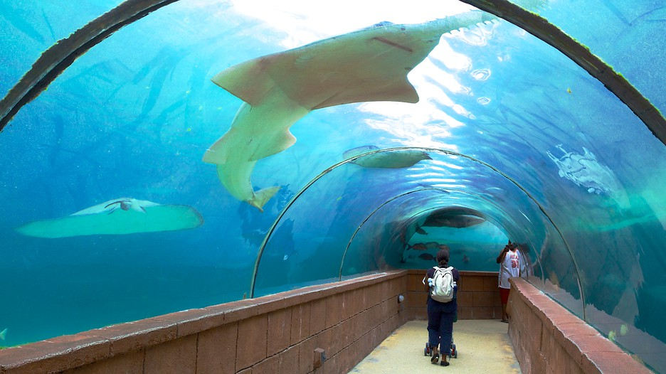 Atlantis Aquarium Sharks Foto Bugil Bokep 2017