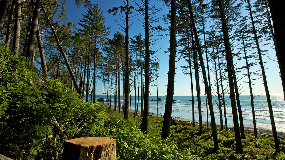 Olympic national park vacation packages book cheap for Cheap vacations from seattle