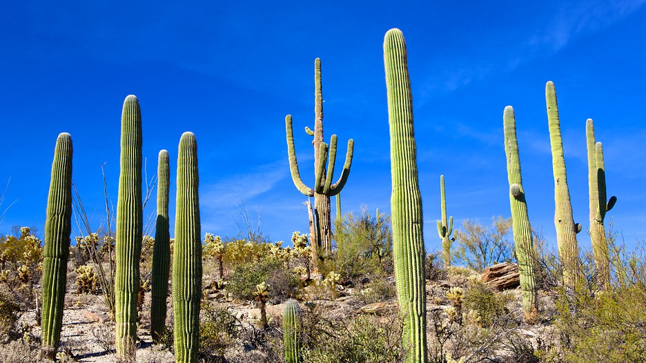Saguaro National Park in Tucson, Arizona | Expedia